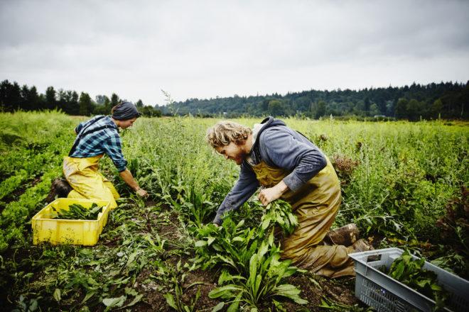 Рабочие на поле
