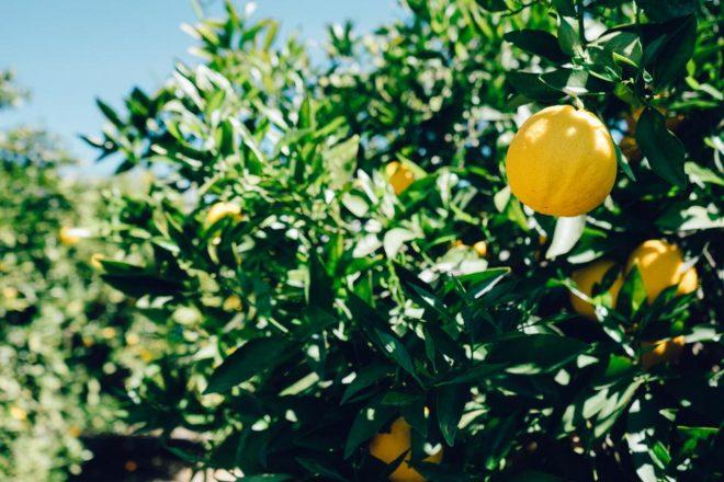 Трудоустройство в сельском хозяйстве Испании