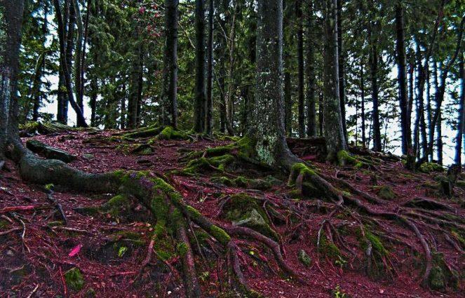 Шварцвальдский лес в Германии