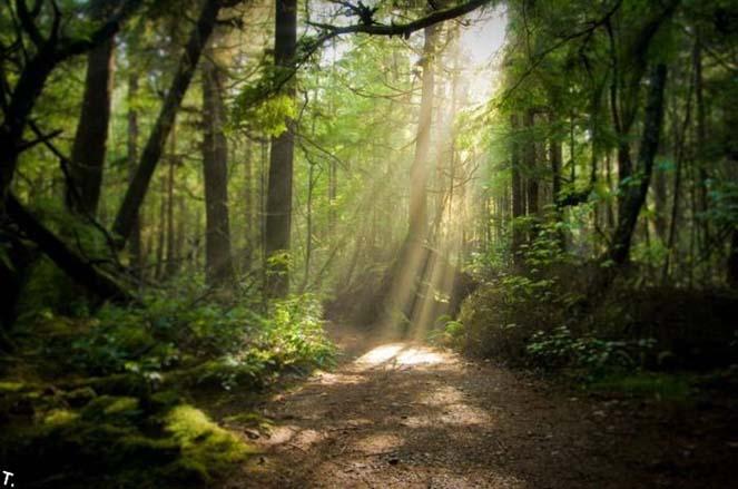 Сказочный лес Шварцвальд