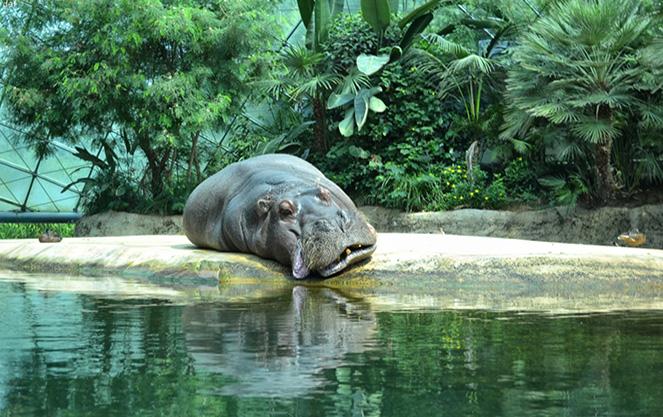 Животные берлинского зоопарка