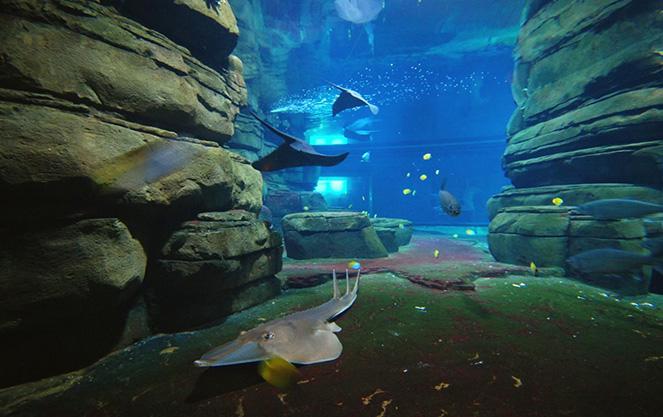 Океанариум берлинского зоопарка