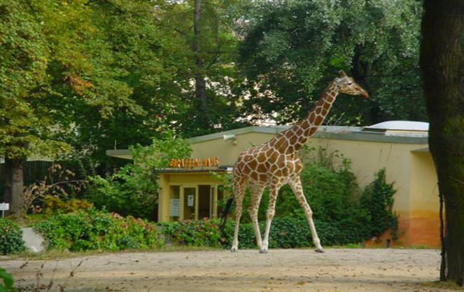 Животные в зоопарке Франкфурта
