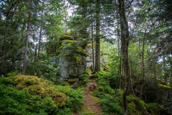 Территория Баварского леса