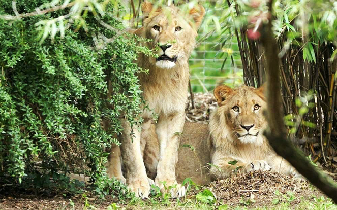 Животные Лейпцигского зоопарка