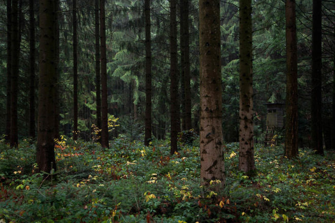 Природа в Баварском лесу