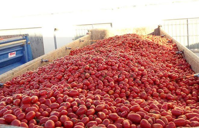 Праздник помидор