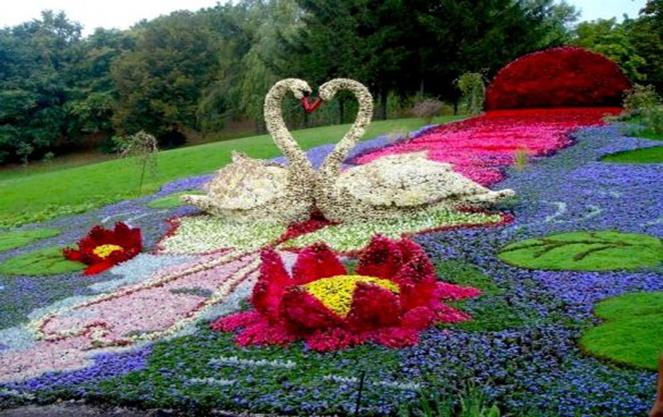 Лебеди на острове цветов майнау