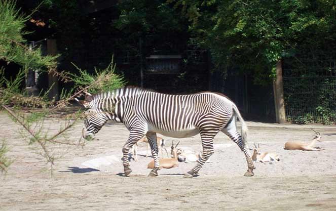 Зоопарк вильгельма в Штутгарте