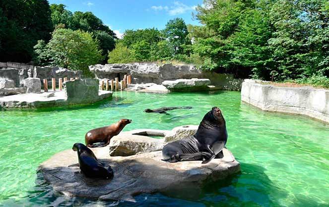 Зоопарк хеллабрунн в Мюнхене
