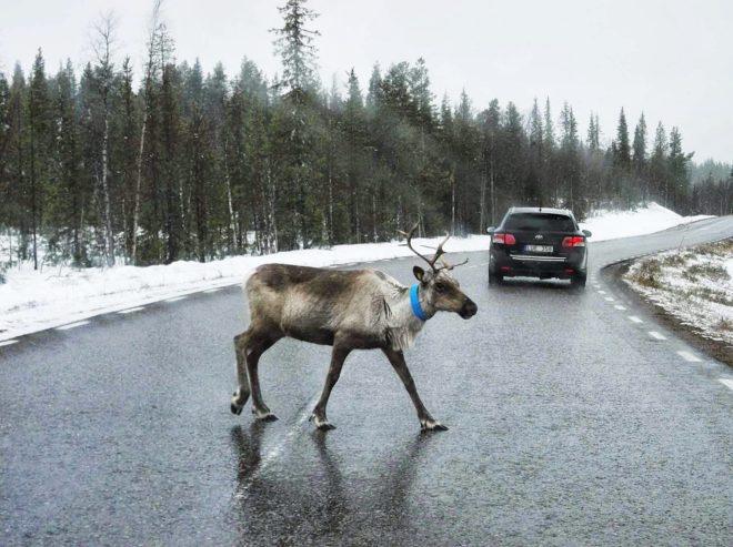Путешествие в Финляндию на машине