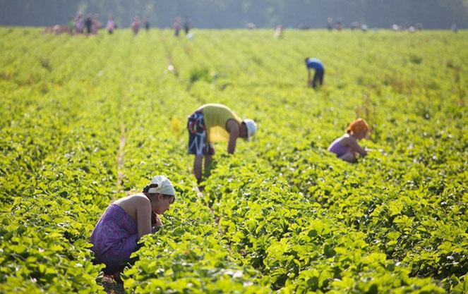 Сбор урожая в финляндии