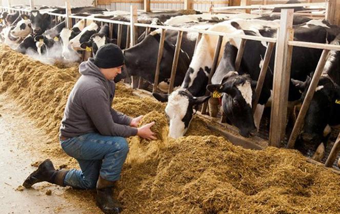 Работа на ферме в финляндии