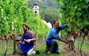 востребованные профессии в Италии