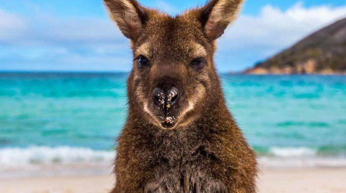 В одном из регионов Австралии впервые за 7 недель не зафиксировано ни одного случая коронавируса
